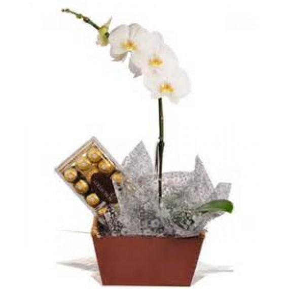 Orquidea e Chocolate