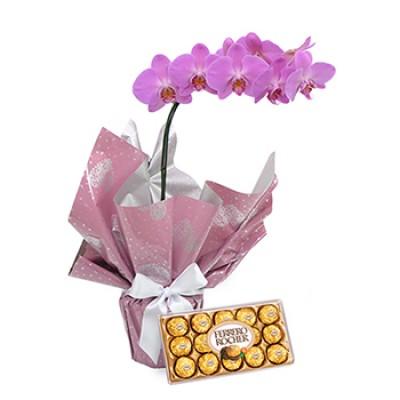 Orquídea Lilas e Chocolate
